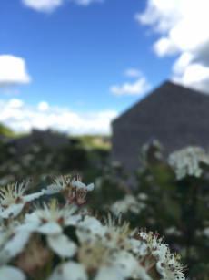 Kig ind over et plantebælte ned mod landskabshusene