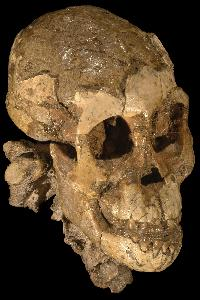 Could pre-hominids speak? 'Lucy's baby' says 'maybe' and 'sort of'
