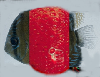 my fishberry