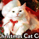 Skeptical Kitten Christmas Photo Contest