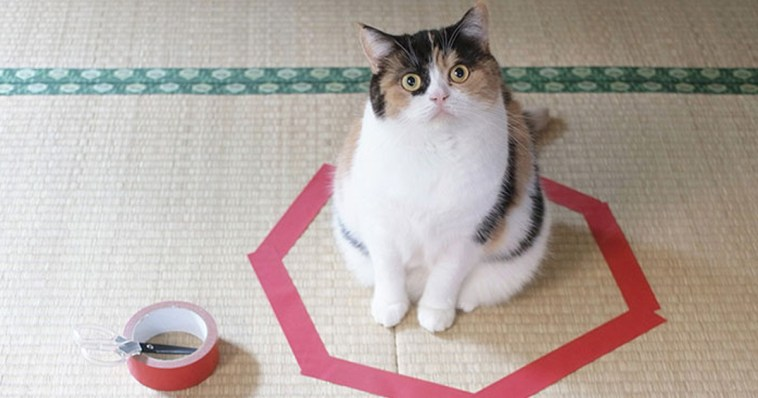 how-to-trap-a-cat-circle