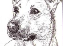 pet portrait sketch by Thomas Dalsgaard Clausen
