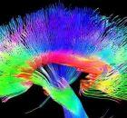 artists brain pathways