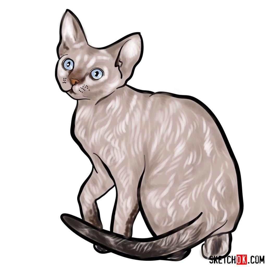 How to draw the Devon Rex cat