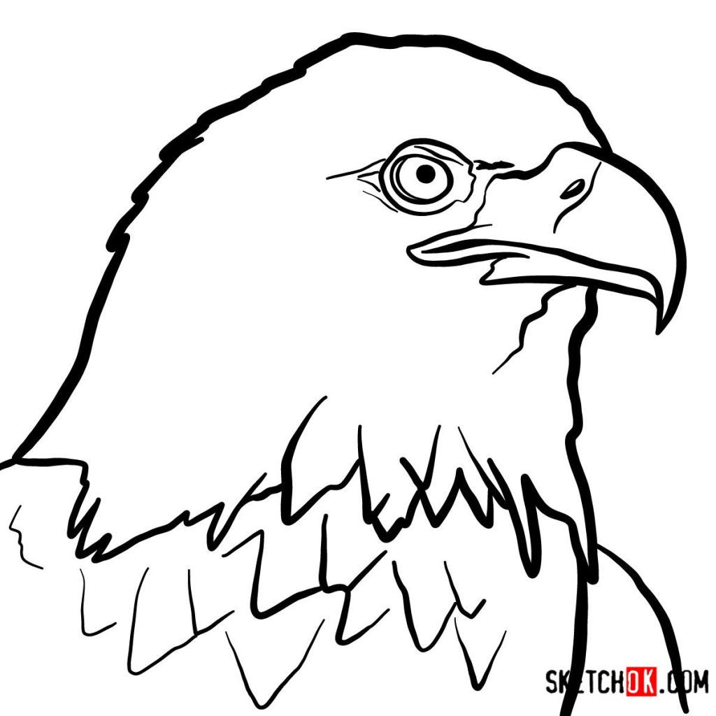How to draw Bald Eagle's head
