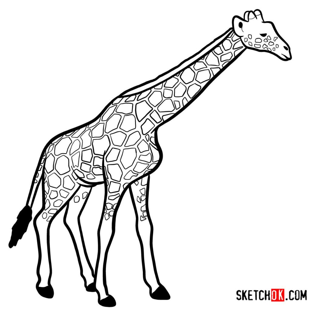How to draw a Giraffe in full growth