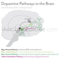 Dopamine Pathways in the Brain (and schizophrenia)