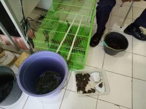 Beberapa satwa yang diamankan oleh balai karantina pertanian kelas II, Yogyakarta.