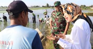 Target LTT Cirebon Tertinggal, Kementan Sidak ke Petani