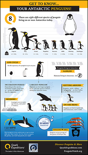 Penguins of antartica