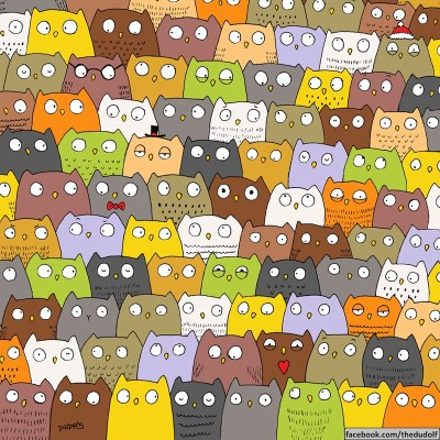 find cat in owls