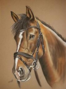 Horse Pastel Portrait