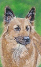alsation-pastel-portrait