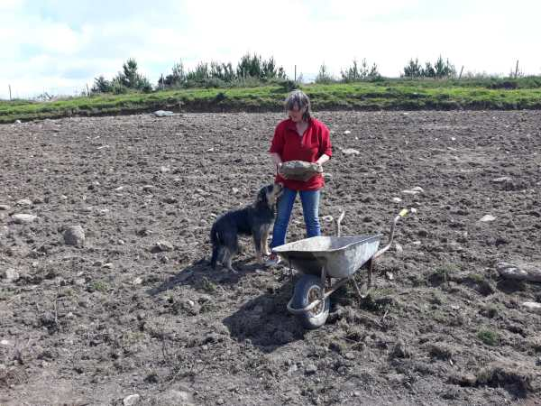 Skibbereen Animal Rescue new field