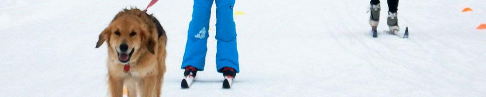 Crust Skiing is Prime!