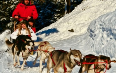 Dog Sledding Canadian Wilderness