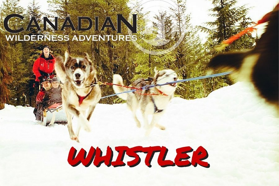 Whistler Winter Activities :: Dog Sled Tours