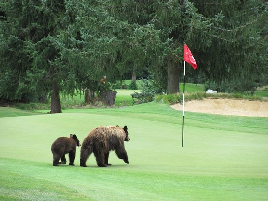 Whistler Golf Course (1)