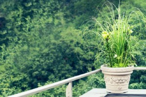 Read on to discover the 5 allergy free flowers that do not trigger symptoms in those suffering from allergic reactions.