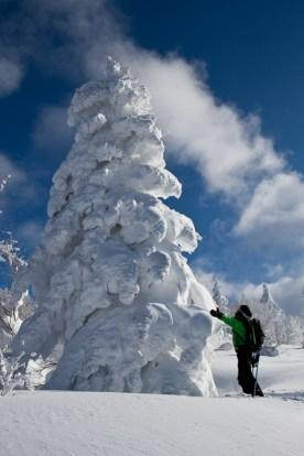 Pierrot en extase devant cet arbre platré