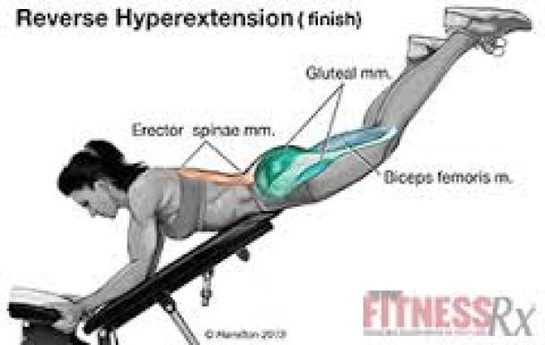 reverse_hyperextension
