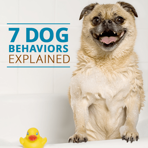 Dog Behaviors Mean They What And