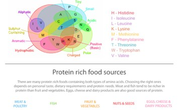 Protein rich foods - fact sheet