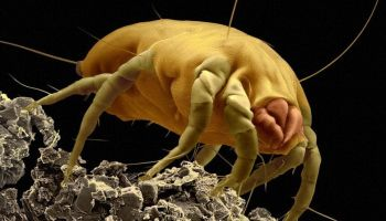 How to tell if a dust mite allergy is causing your eczema