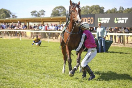Racehorse with fracture