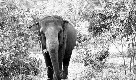 Skins IR - Veterinary/Conservation thermography - Elephants Brazil