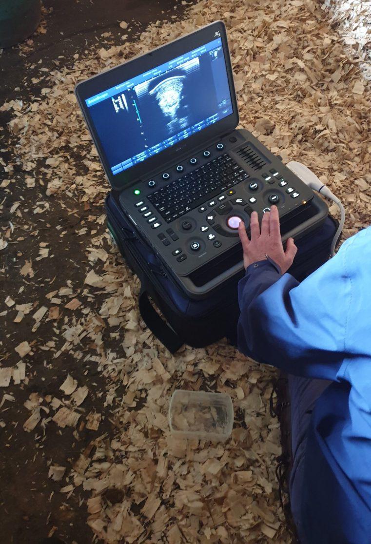 Skins IR - Equine/Veterinary - Ultra Sound post IR assessment