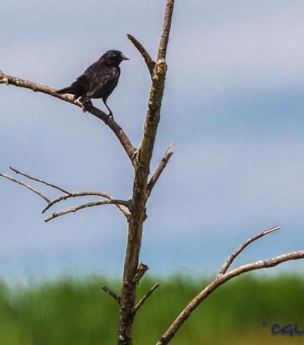 Photo opp with a bird.
