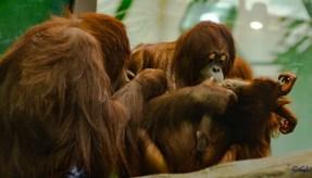 2015_08_10_Cleveland Zoo_100