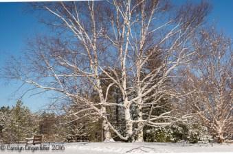 2016_02_18_Trailwalk_Holden Arboretum_0038
