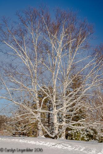 2016_02_18_Trailwalk_Holden Arboretum_0039