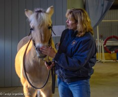 "Maya, a visiting horse, with a member of the Farmpark ""Volunteer Posse"""
