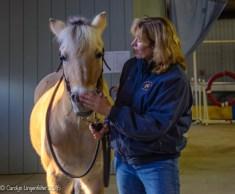 "Maya, a visiting horse, with a member of the Farmpark ""Volunteer Posse"""