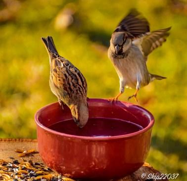 2017_01_01_places_back-yard-birding_0006