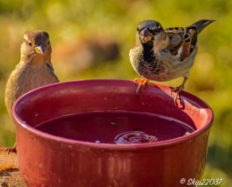 2017_01_01_places_back-yard-birding_0011