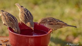 2017_01_01_places_back-yard-birding_0017