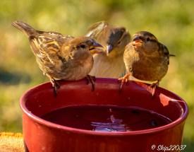 2017_01_01_places_back-yard-birding_0041