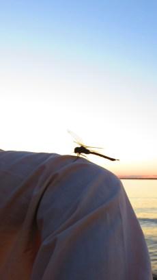 A Dragonfly Friend