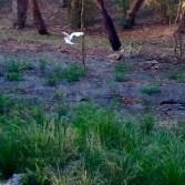 ibis 3