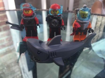 3 Divers and a Shark