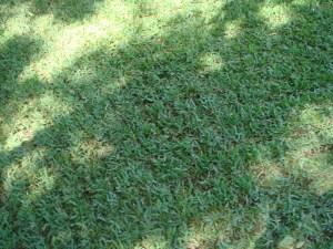 verticut-lawn-Overland-Park-verticutting-Kansas-City