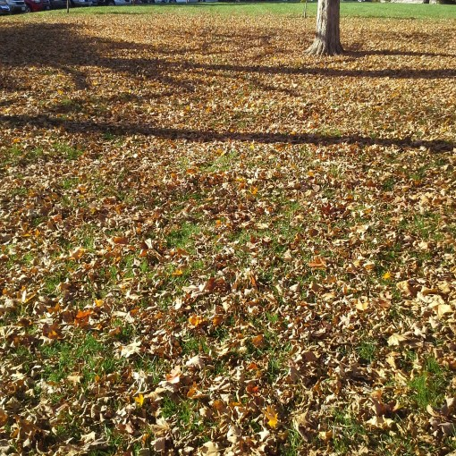 leaf-removal-service-Overland-Park-Leawood-Mission-Hills