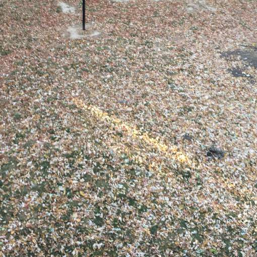 leaf-clean-up-remove-leaves-Kansas-City-Overland-Park