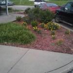 commercial-landscaping-installation-Kansas-City-Overland-Park-Olathe