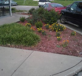 commercial-landscaping-installation-Kansas-City-Overland-Park-Olathe