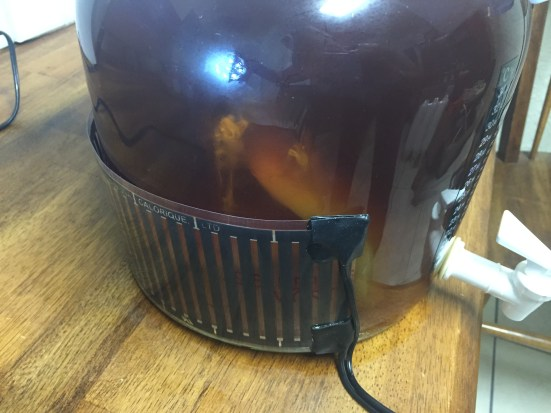 yeasty bits rising off of SCOBY mama